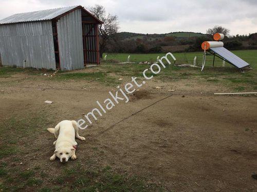 Çanakkale Ezinede satılık çiftlik