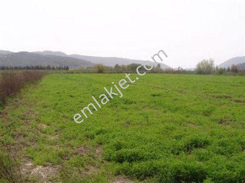 Muğla Ortaca Güzelyurt ta satılık verimli arazi