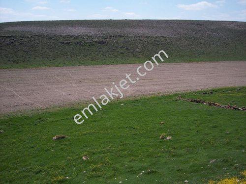 Sakarya nehrine 5 km. cephesi olan 3.500 Dönüm Arazi