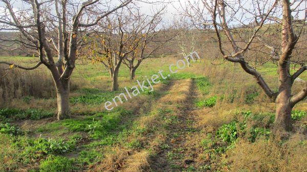 Lapseki Alpot Köyünde Satılık 4.880 m2 Tarla