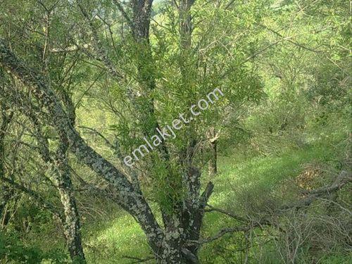Lapseki Karamusalar köyünde 15 420m2 satılık tarla 150 000TL