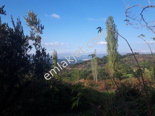 Selçuk gazide köy içi yola cephe hobi bahçesi 1020 m2