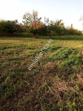 Battalgazi alişar da iki cephesi asfalt suyu bol bahçe