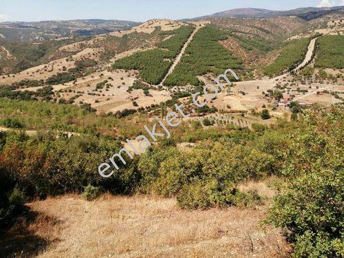 Manisa Demircide SATILIK 90 DÖNÜM Tarım Arazisi