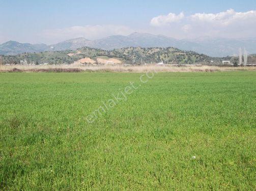 Aydın Köşk Yavuzköy de 77,800 m2 termal otele uygun arazi satılık