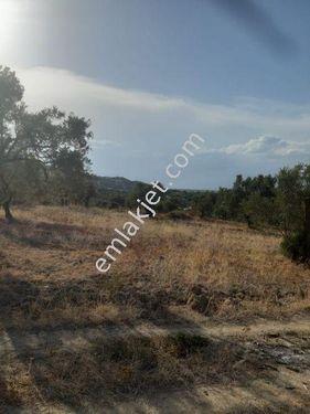 ERKOÇ emlaktan Yenipazar Direcik te satılık arazi
