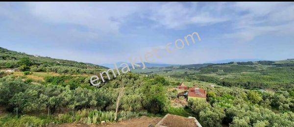 Mudanya Çepni Köyünde Satılık 387 Metrekare Zeytinlik