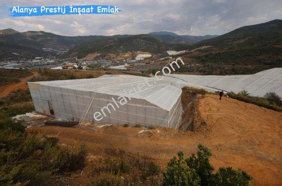 GAZİPAŞA MUZKENT 40.000 m2 AKILLI SİSTEM MUZ SERASI