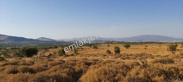 Çandarlı da Her Türlü Tarıma Uygun Yatırımlık 1600 D Arazi