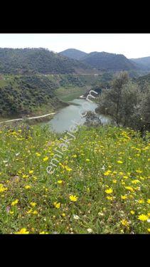 Bayındırda Full Baraj Manzaralı Zeytinlik