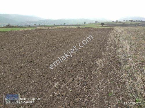 Çanakkale Biga Hacıköy 4625m2 tarla