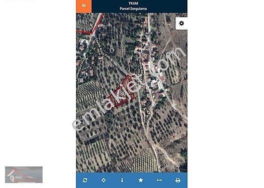 Şok Şok Manisa Kırkağaç Siledik köyünde Satılık Zeytinlik