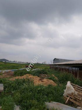 kelepir çiftlik