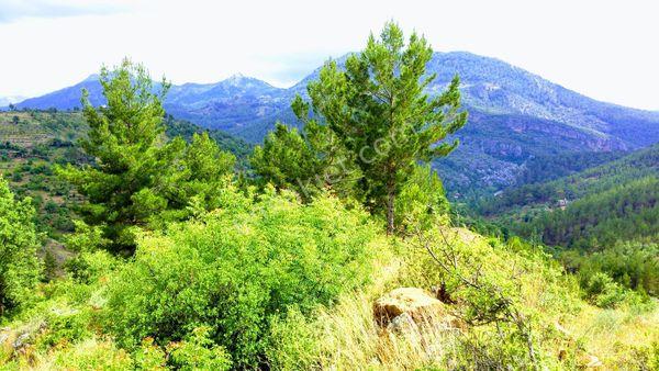 Sahibinden Alanya Tırılarda muhteşem doğa manzaralı arazi