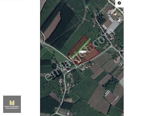 ÇARŞAMBA KARABAHÇE DE FINDIK BAHÇESİ 4815 m2
