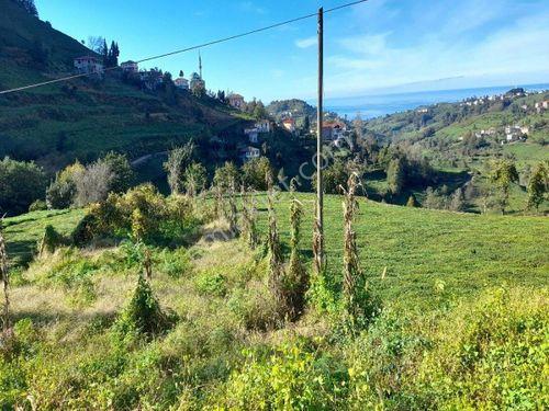 Rize İyidere satılık 2800 m2 arazi
