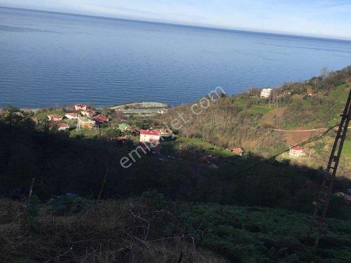 Rize Çayeli tünel çıkışında satılık 9300 m2 arazi