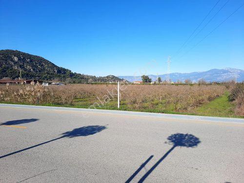 Muğla Ortaca Dalyan da satılık ana yola sıfır nar bahçesi