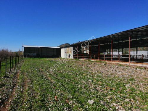 Ortaca da satılık 11300 m2 arazi sera besi ve mandıra tesisi