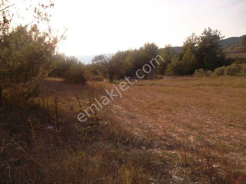 muğla merkez  algı köyün de 18195.m2 tarla
