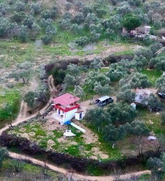 Pınarbaşı mahallesi sınırları içerisinde incir bahçesi