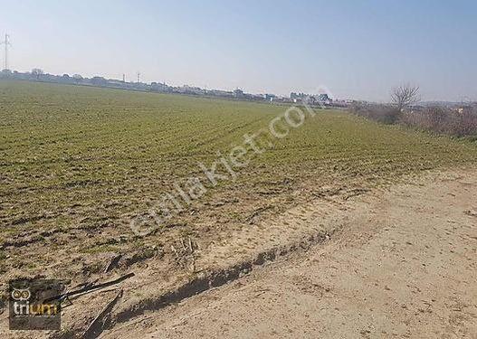 triumYeniköyde 3700 m2 asfalt yola cepheli yakın yer aciLl