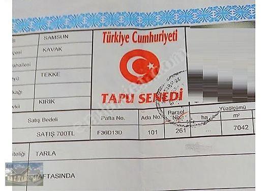 ASİL den SAMSUN - KAVAK/TEKKE KÖYÜNDE KELEPİR TARLA