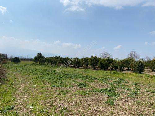 Zeren Emlak'tan İsabeyli DKY'altında satılık portakal bahçesi...