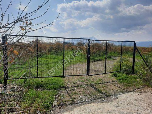 Köyceğiz Kavakarası nda satılık 12,500 m2 verimli nar bahçesi