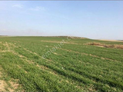Manisa Turgutlu Satılık Arazi