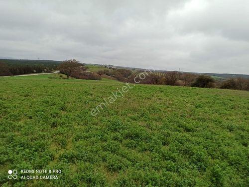 Çan Yaykın Köyünde 4250 M2 Satılık Tarım Arazisi
