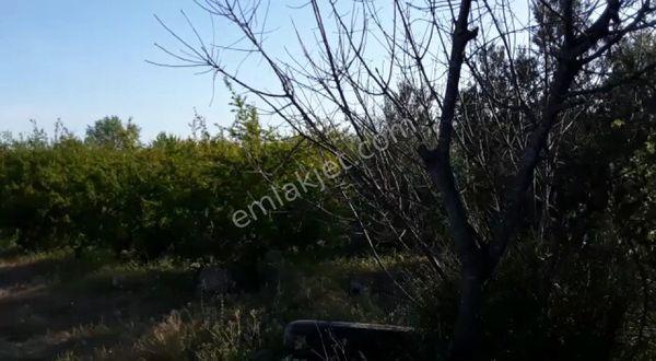 kelepir yatırımlık nar bahcesi krediye uygun ısparta yoluna yakın