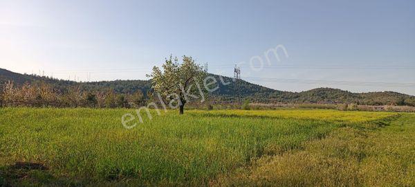 Muğla Milas Tuzabat köyünde yolu olan tarla