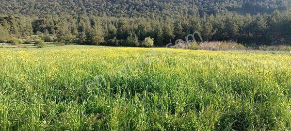 Muğla Milas Tuzabat köyü yolu olan satılık tarla vasıflı arazi