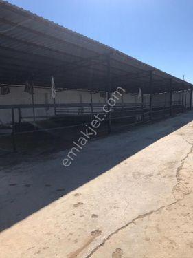 satlık çiftlik 750 baş besi süt tankları 17bidönüm karanlık dere
