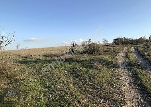 Pamukçuda Cevize Elverişli Satılık 8000m2 Satılık Fırsat Arazi