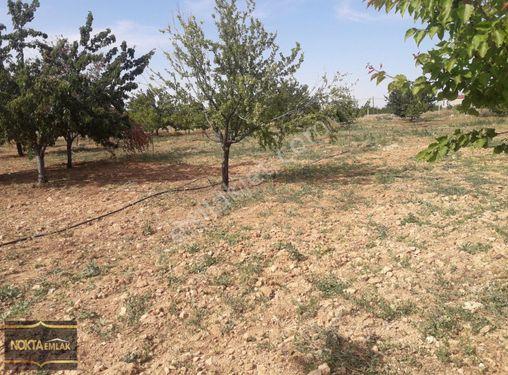 Ankara yoluna sıfır Satlık bahçe