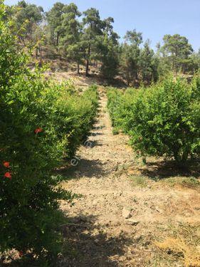 Antalya Finike Gökbük Köyünde 9.300m2 Satılık Nar Bahçesi