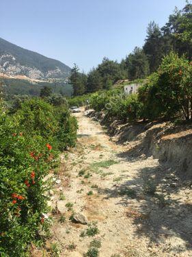 Antalya Finike Gökbük Köyünde 4.000 m2 Satılık Nar Bahçesi