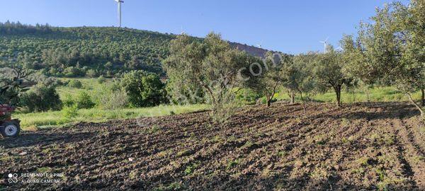 Beyce Köyünde 900 m Hobi Bahçesi +Zeytinlik