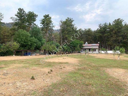 Ortaca da çam ormanı ve çay kenarı 10345 m2 arazi ve müstakil ev