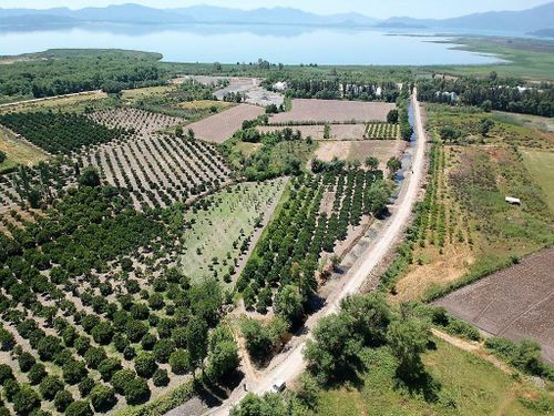 Köyceğiz de 2650 m2 müstakil tapulu narenciye bahçesi satılık