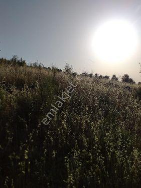 Dalaman Elcik Köyünde Satılık 20.000 M2 Tarla