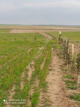 Sarıcaali köyünde tarla çiftlik bağ yeri