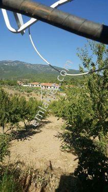 Arı emlak tan BUCA KAYNAKLAR'da satılık özel ağaçlandırma sahası