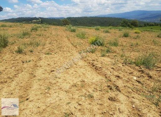 Sakarya Taraklı içdedeler Köyü 19 dönüm acil ihtiyaçtan satılık
