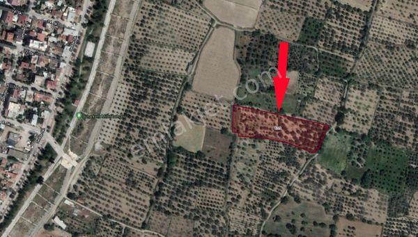 Sahibinden  Buharkent Merkeze Yakın Satılık Bakımlı 6800m2 Arsa