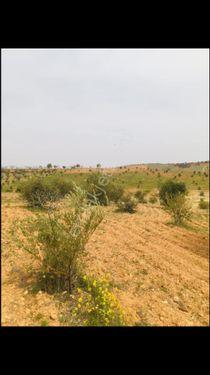 nizip yolu günbulur mevkinde mükemmel arazi