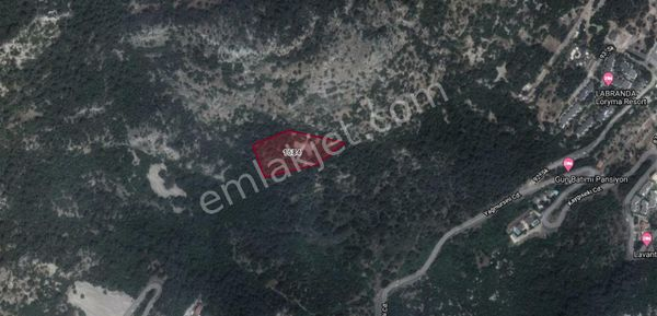 Arya emlaktan Turunç'ta 7341 metrekare zeytinlik