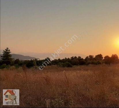 Köyceğiz zeytin alanı göl manzaralı tarla 3600 m2